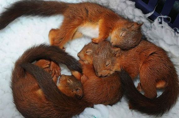 links sleeping squirrels