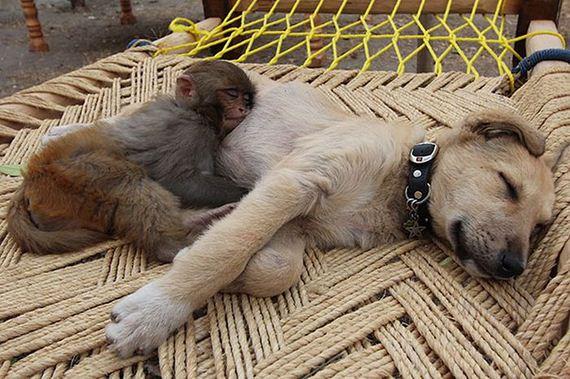Links monkey hugging dog