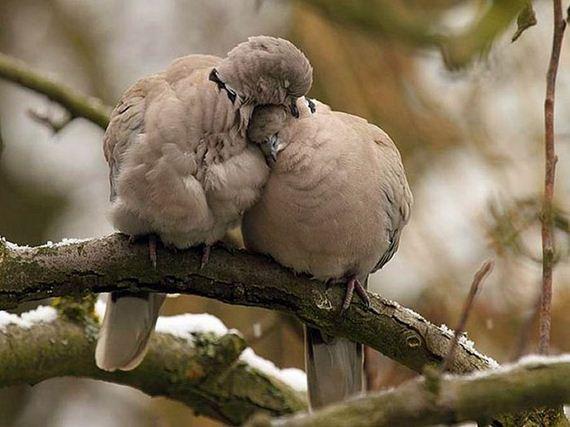 links sleeping birds