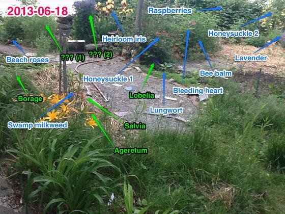 2013-06-18_garden_560
