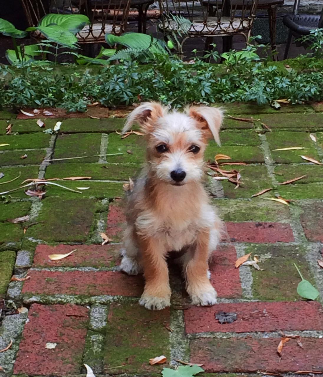 links cute dog
