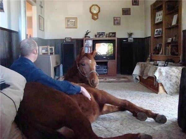 Links Cute Emergency Horse