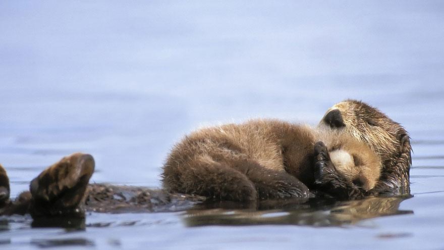 mother otter links