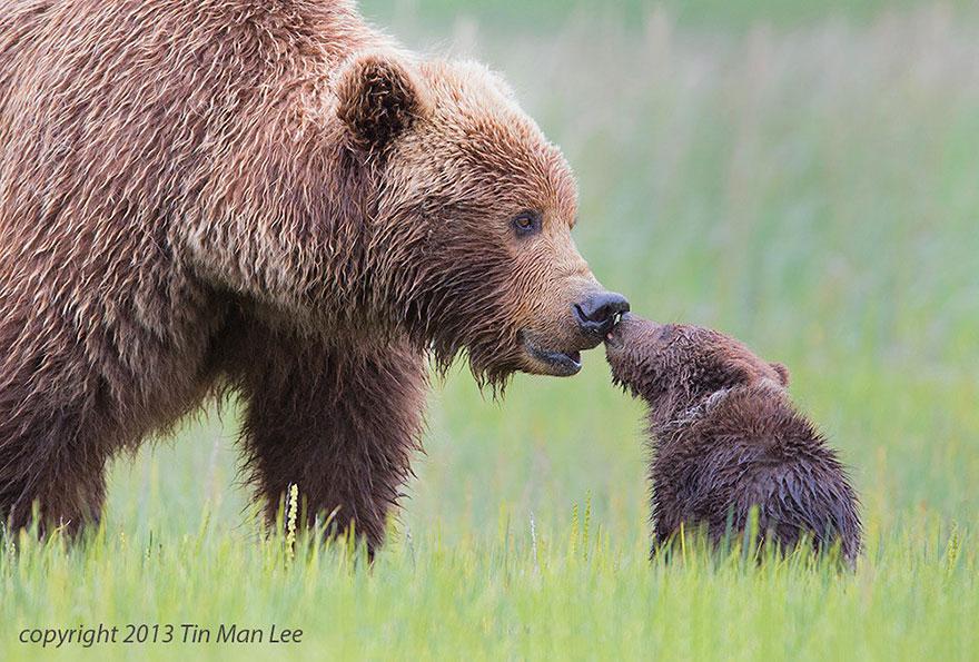 bears links