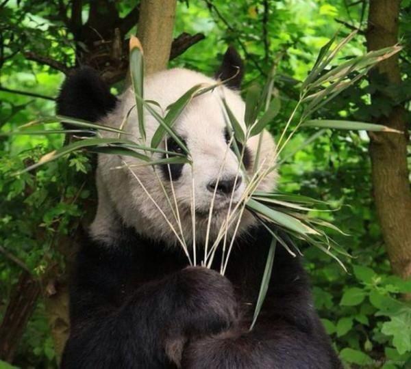 hiding panda links