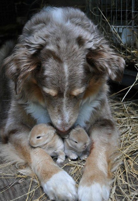 dog and baby bunnies links