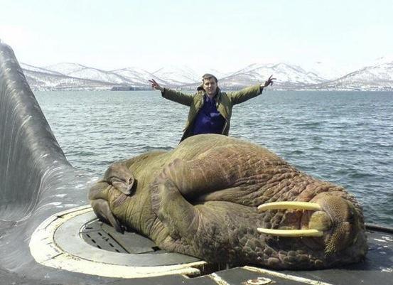 walrus links