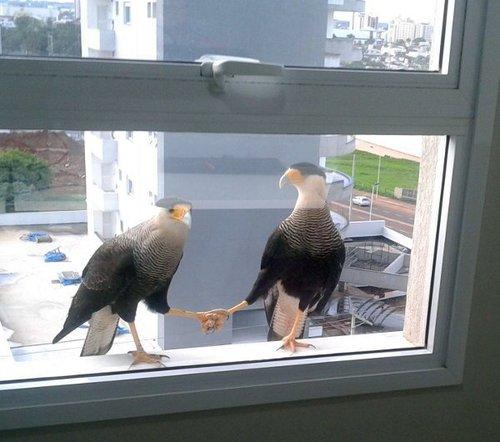 birds holding hands links