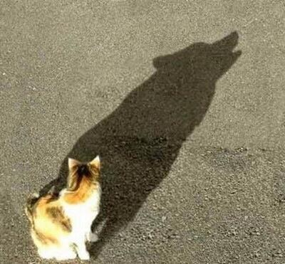 cat with dog shadow links