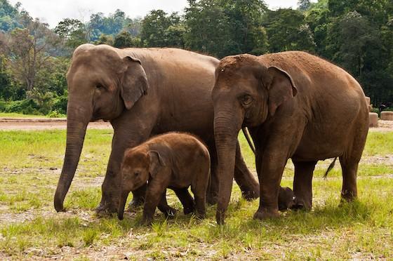 elephants_2