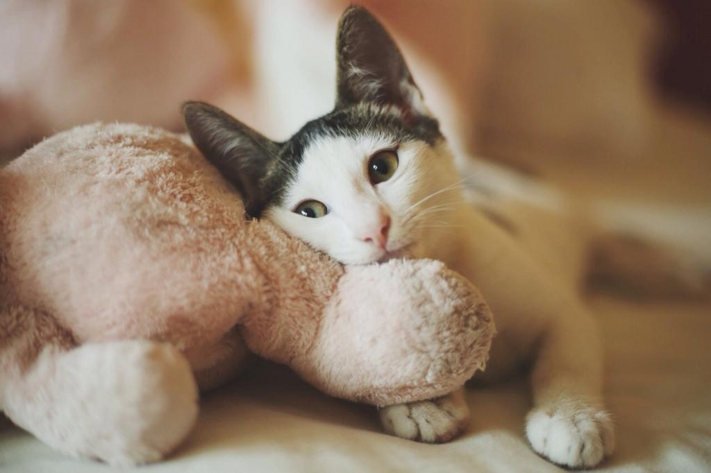 sweet cult cat links