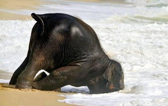 baby elephant links