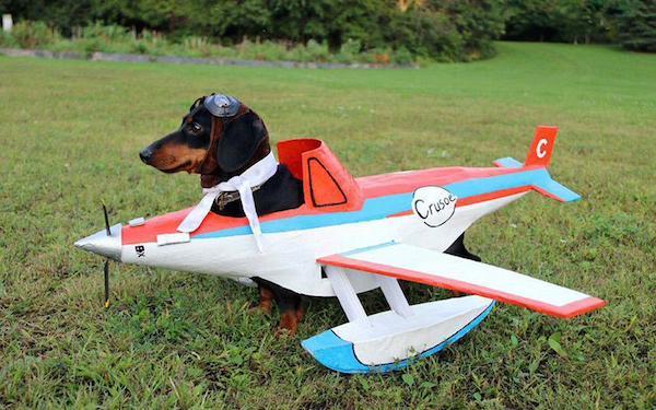 dog_airplane