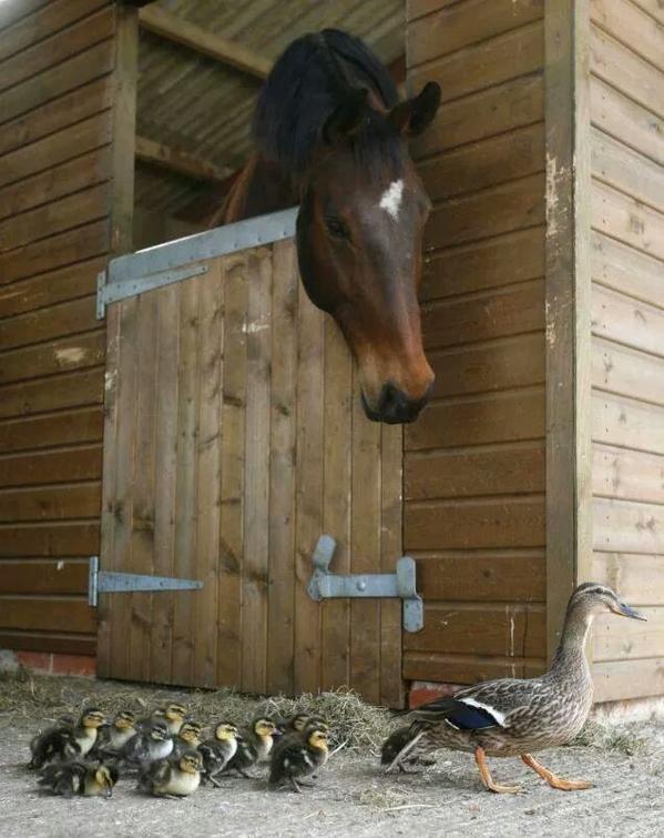 horse_duck-G