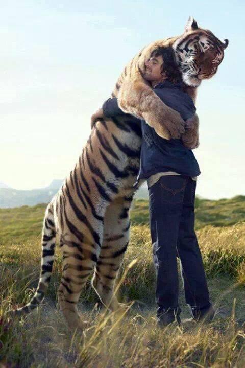 hugging tiger links