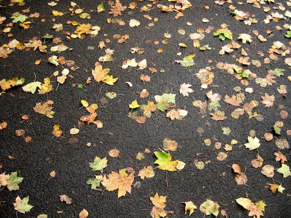 leaves_asphalt