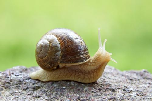 pretty snail links
