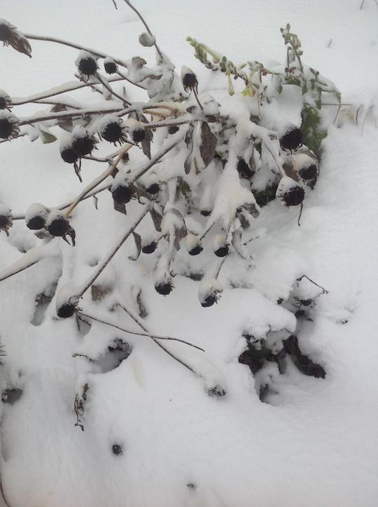 snow_bes