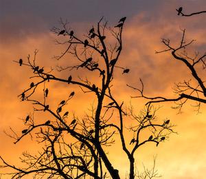 birds_300