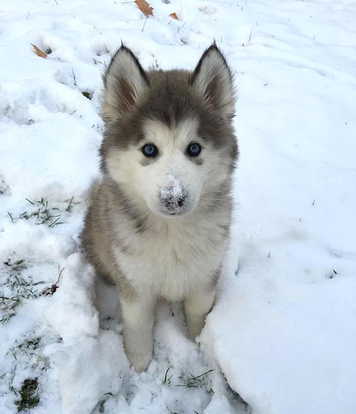 cute baby wolf links