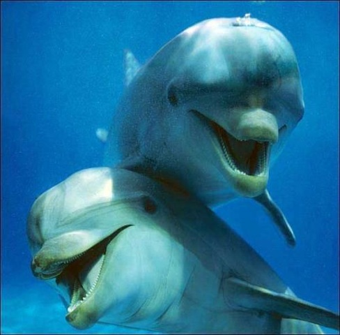 dolphins links