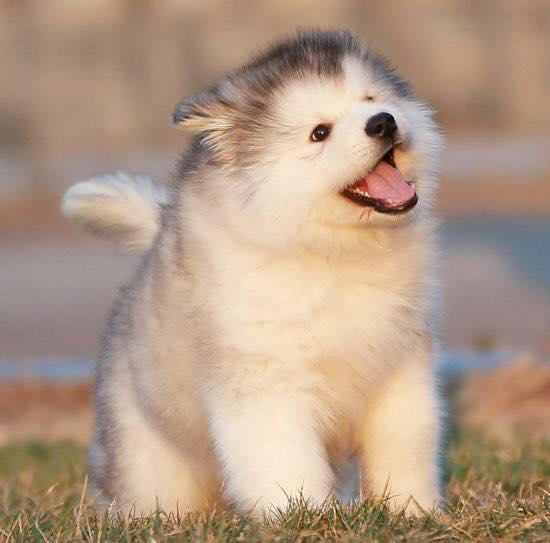 antidote_puppy
