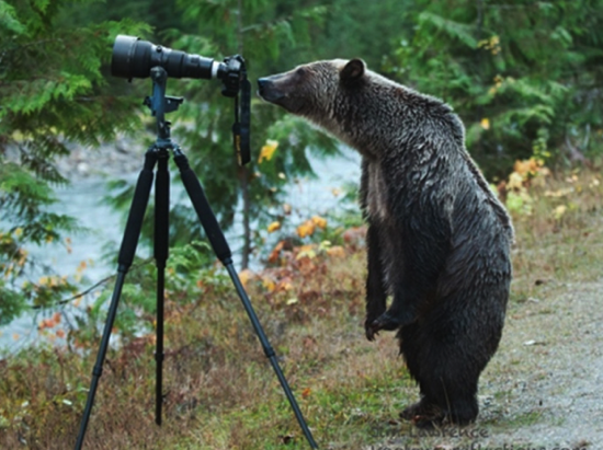 bear camera links