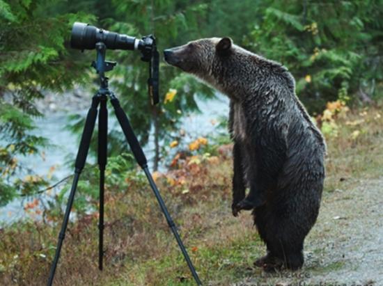 bear camera links