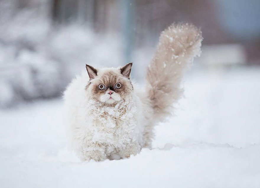 cat in snow links
