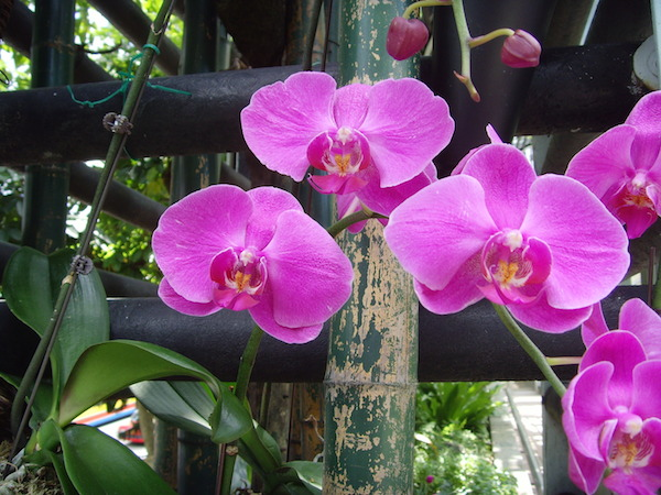 mm_orchid_1