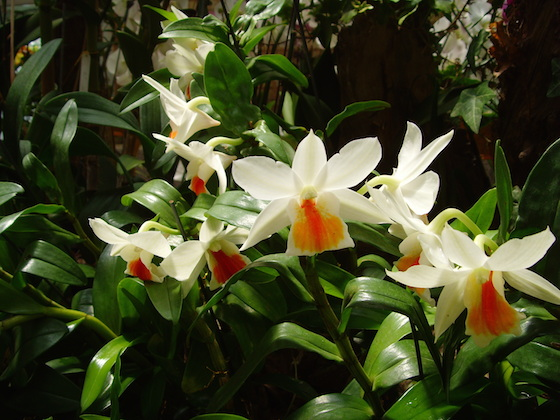 mm_orchid_2
