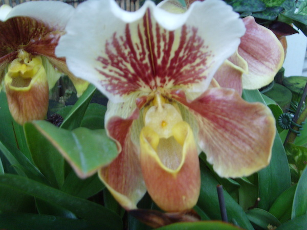 mm_orchid_5