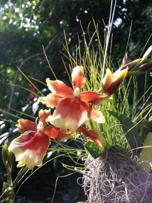 orchid_arboretum