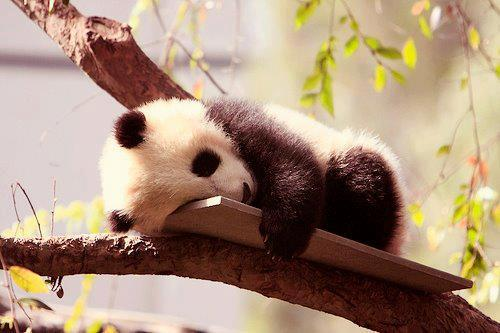 passed out panda links