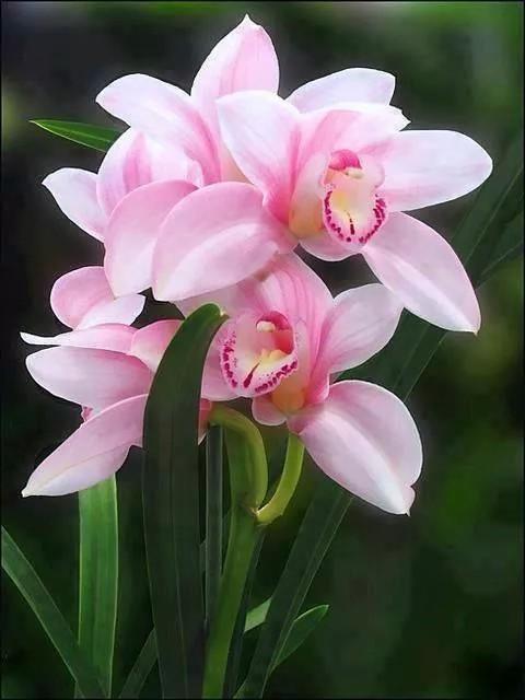 plantidote
