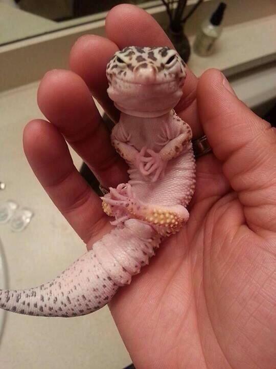 smiling lizard links