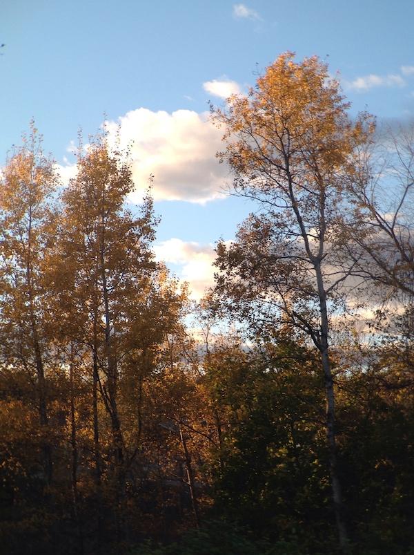 western_trees