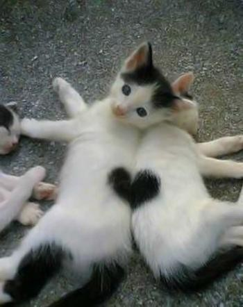 Valentine-Day-cats Links