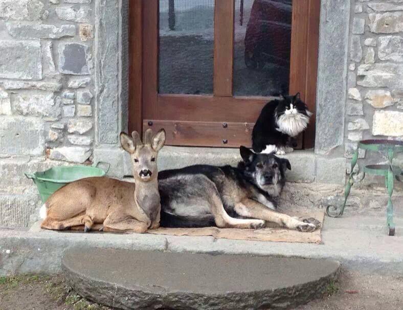 animals at vet links