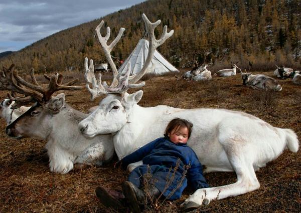 antidote_reindeer