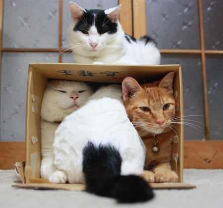 cats in box links