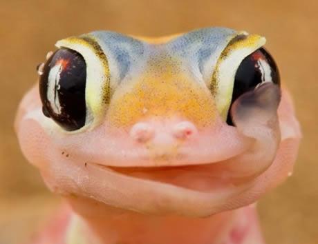 cute lizard links