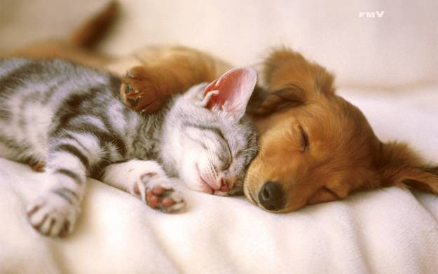 sleeping cat and dog links
