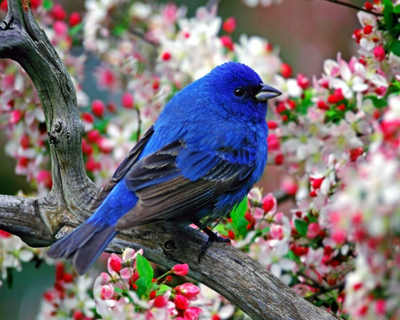 beautiful-birds-links
