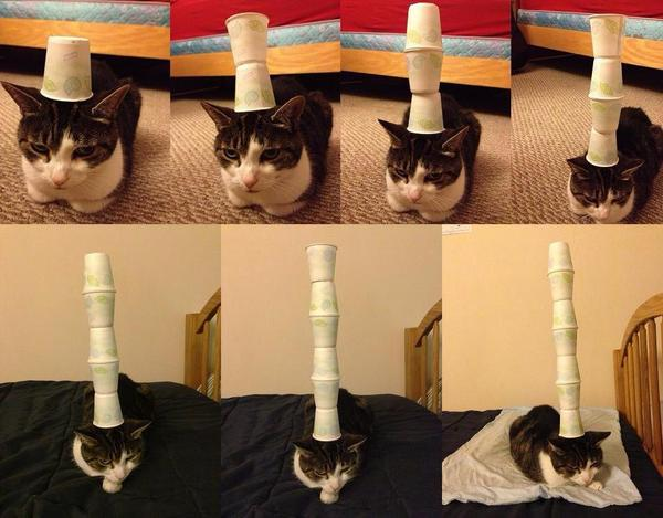 indifferent cat links