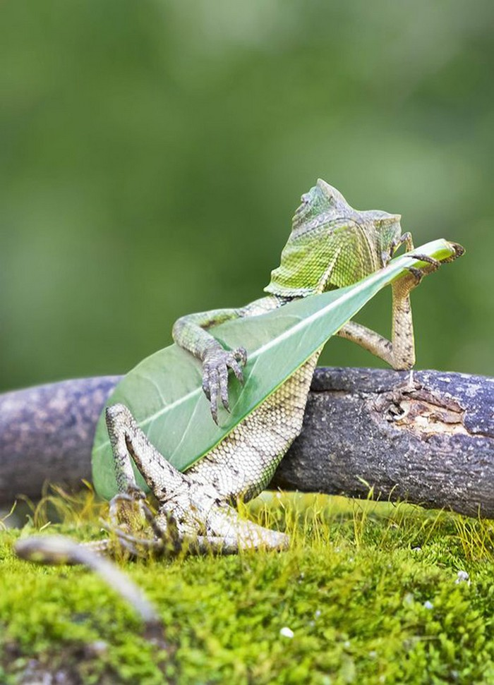 lizard-playing-guitar-links