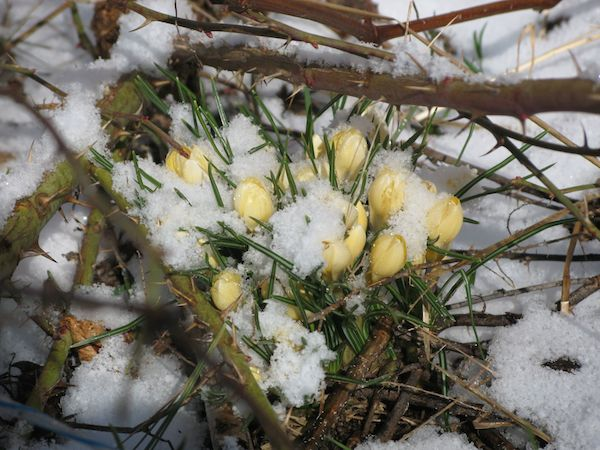 Easter snow 003