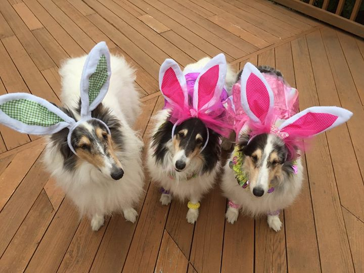Judy's dogs links