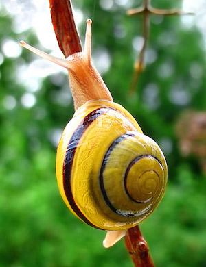 Snail-WA_edit02_300