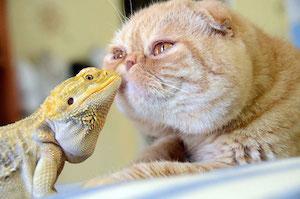 animal-friendships_300